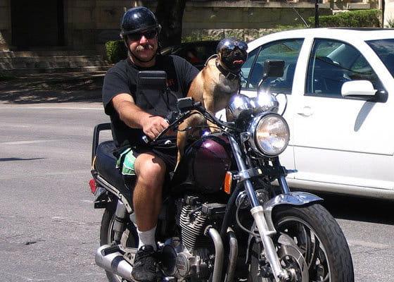 Perro con casco
