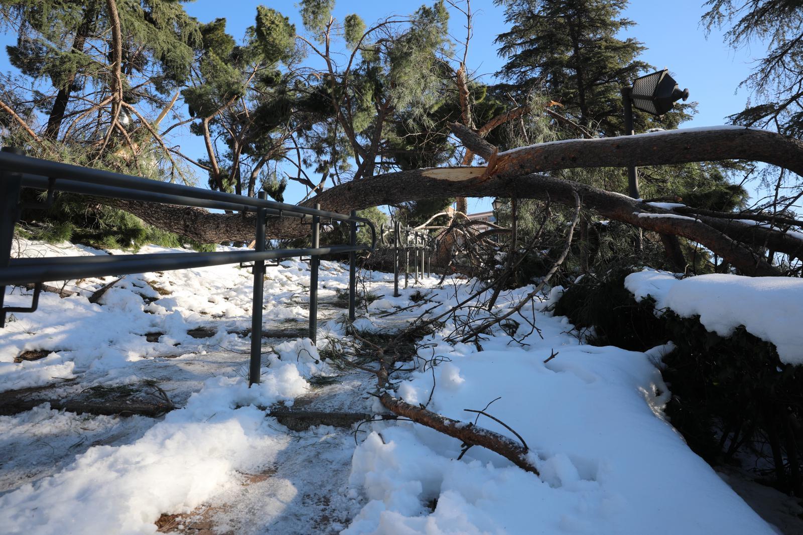 Nieve Nevada Danos Madrid Filomena 03