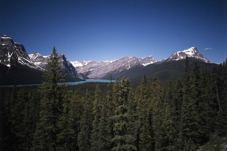 Icefields_Parkway_17
