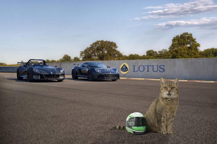 Lotus Pet Lids protection for four legged friends (2)