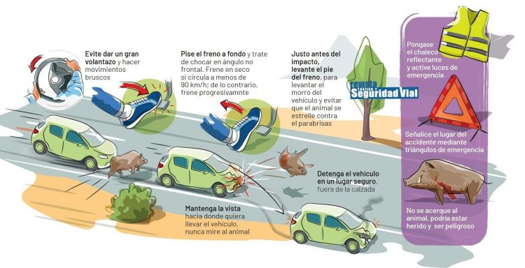 Accidente Cinegetico Animales Infografia Dgt