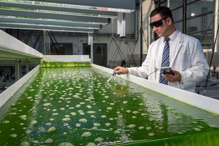 Biocombustible Investigacion Algas Universidad De Munich