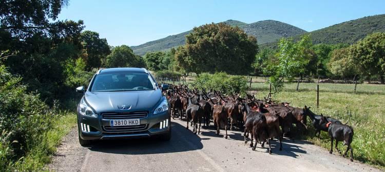 coche-autonomo-dilema-vaca-02-1440px