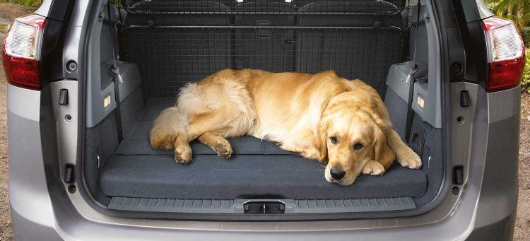 Coche Para Viajar Con Perro