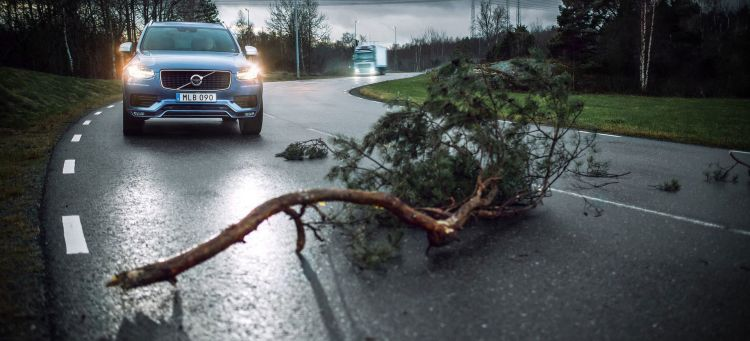 Conducir Con Viento Arbol Volvo