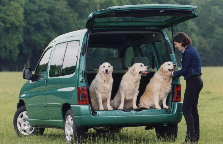 Furgoneta Viajar Perros