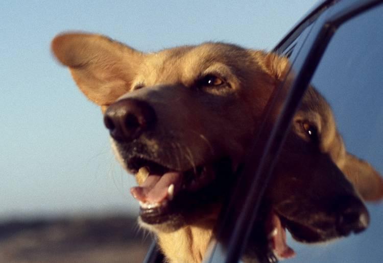 rescatar-perro-coche-02-1440px