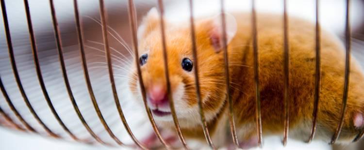 volvo-hamster-01-dm-700px