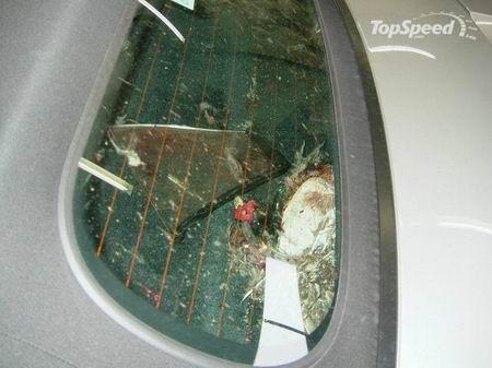 Un pájaro invade el espacio de un Porsche Boxster a 250 km/h