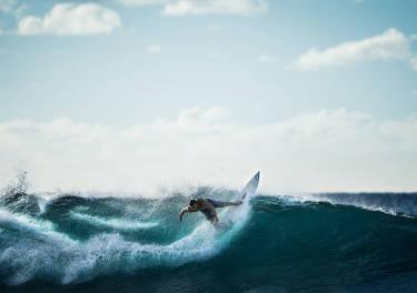Así será el surf del futuro: tablas conectadas que te informan sobre el estado del mar